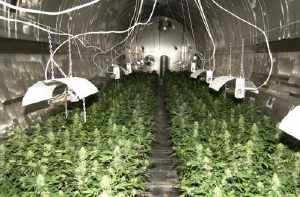 http://www.thespoof.com/sitepics/thespoof/grow room.jpg